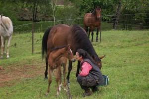 wendy_foal
